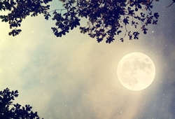 A Midsummer Night's Dream | The Loft, QUT Creative Industries Precinct