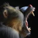 Monkeys! A primate story